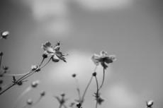 flower895-3