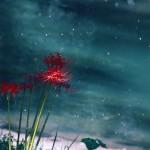 【高解像度】川岸に咲く彼岸花(3パターン)