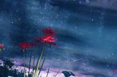 flower896-2