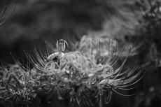 flower899-2