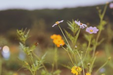 flower900-2