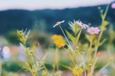 flower900
