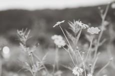 flower900-3