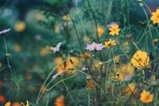 flower901-2