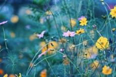 flower901