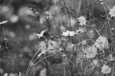 flower901-3