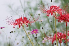 flower904-2
