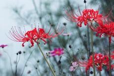 flower904