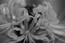 flower905-3