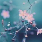 【高解像度】実をつける爆蘭(ハゼラン)(3パターン)