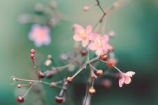 flower907-2