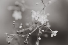 flower907-3