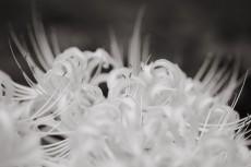 flower908-3