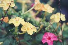 flower910-2