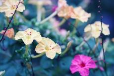 flower910
