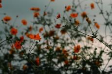 flower911-2