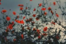 flower911