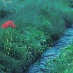 【高解像度】小川と赤い彼岸花(3パターン)