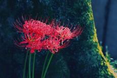 flower913-2