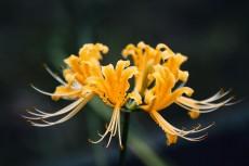 flower914-2