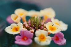 flower915-2