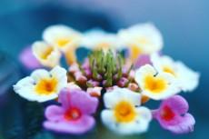 flower915