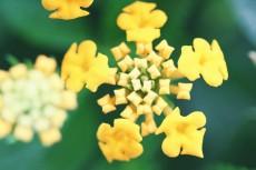 flower916-2
