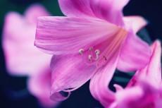 flower917