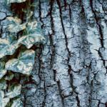 【高解像度】ひび割れた木の幹と葉(3パターン)
