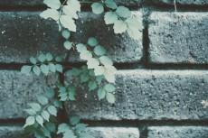 flower920