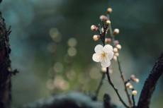 flower923
