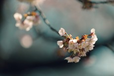 flower925
