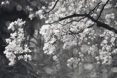 flower761-3