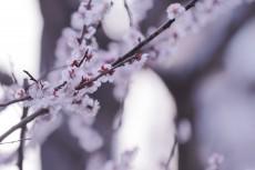 flower927