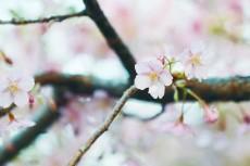 flower933-2