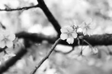 flower933-3