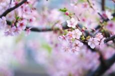 flower934