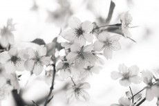 flower935-3