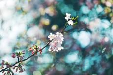 flower936-2