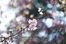 flower936
