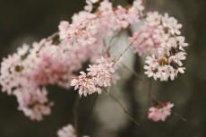 flower937-2