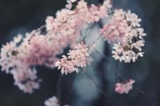 flower937