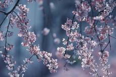 flower938