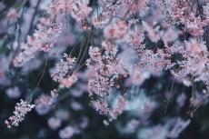 flower939