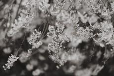 flower939-3