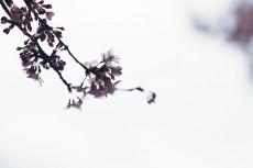flower942-2