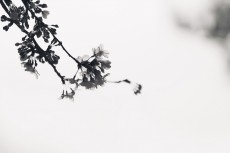 flower942-3