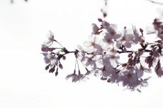 flower943-2