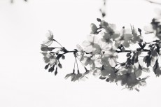 flower943-3