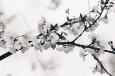 flower944-3